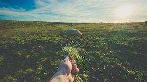 Sostenibilidad en el sistema agroalimentario.